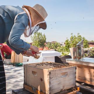Bee hives masson.jpg