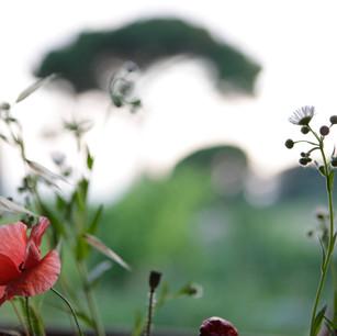 Blumen_Glavotok.jpg