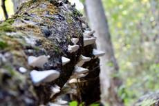 Mushrooms Listening