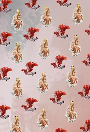 Siamese fighting fish wallpaper