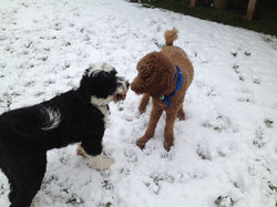 Baxter & Farley