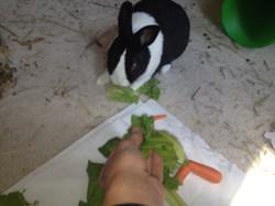 Brandy feeding bunny