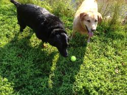 Brandy's pups Bunny & Mac