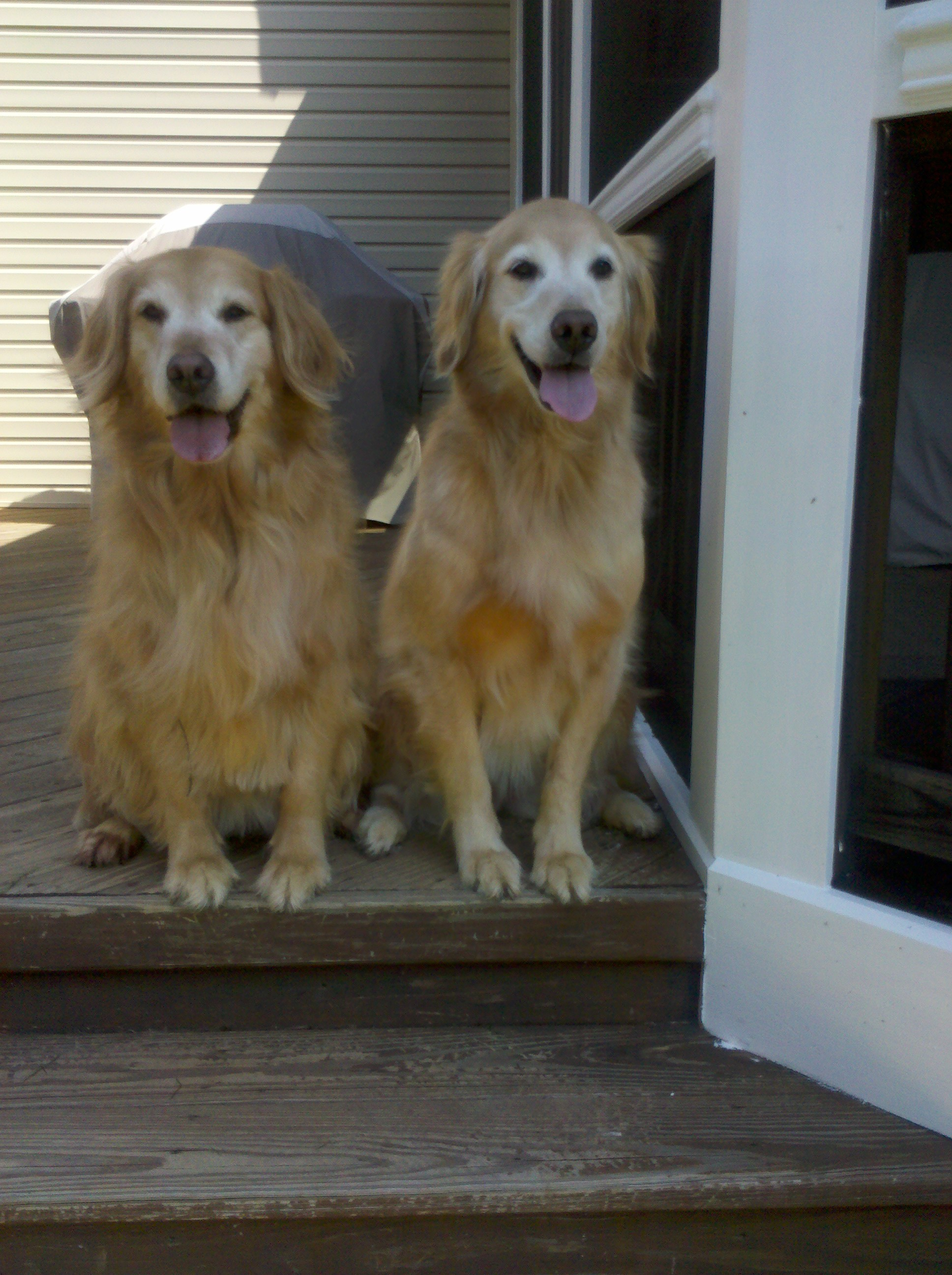 Sadie & Ginger
