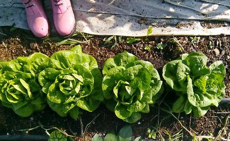 4 Salate_edited_edited.jpg