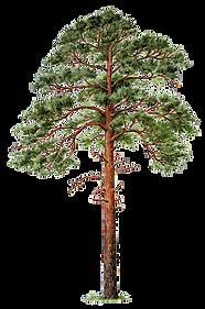 Растения PNG