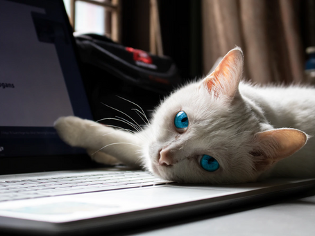 Tips for Nurturing a New Pet and New Business Simultaneously
