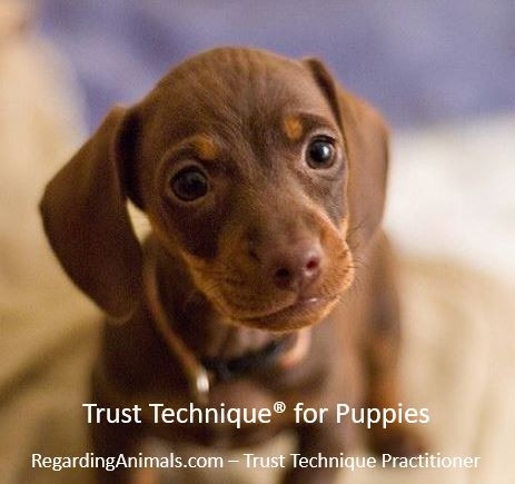 Trust Technique for puppies, Gift for puppy
