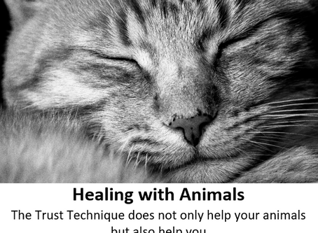 Healing with Animals