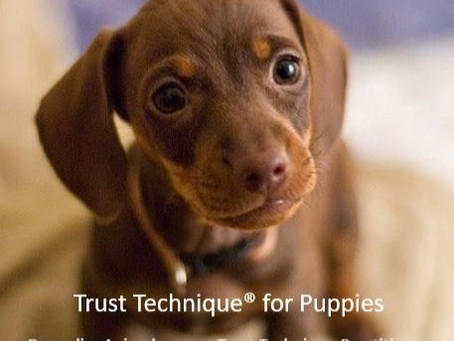 Trust Technique for Puppies