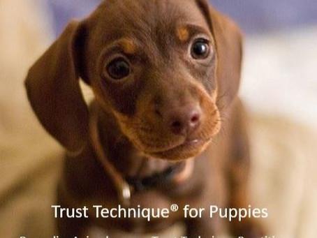 Trust Technique for Puppies