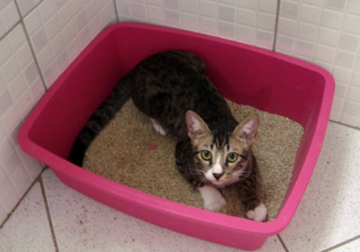 why cats won't use the litter box