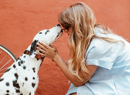 "Say ""YES!"" - Animal Communication"