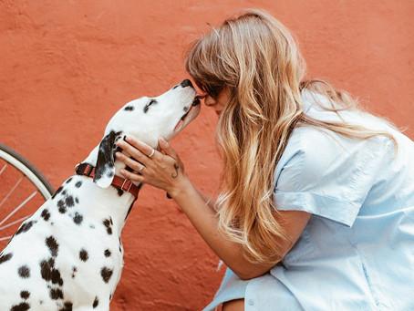 """Say """"YES!"""" - Animal Communication"""