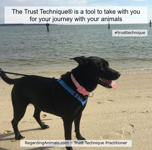 Trust Technique is a tool to take with you for your journey with your animals