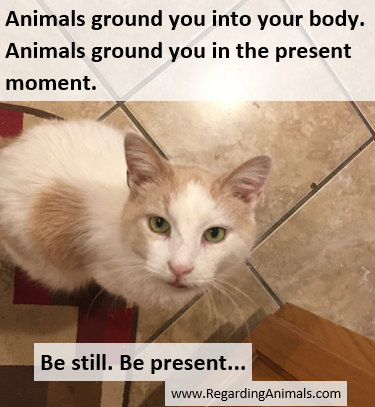 Animals ground you into your body. Be still. Be present