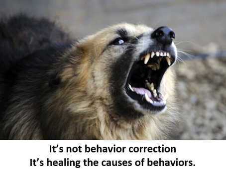 It's not behavior correction. It's healing the causes of behaviors.