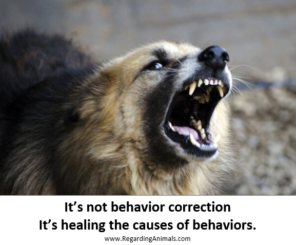 It's not behavior correction It's healing the cause of behaviors
