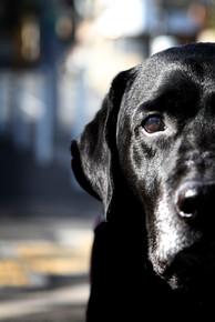 dog head.jpg