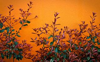 Orange wall.jpg