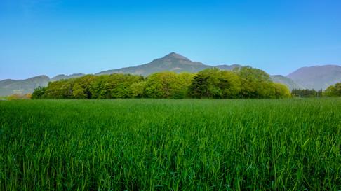 Early summer green Tochigi.jpg