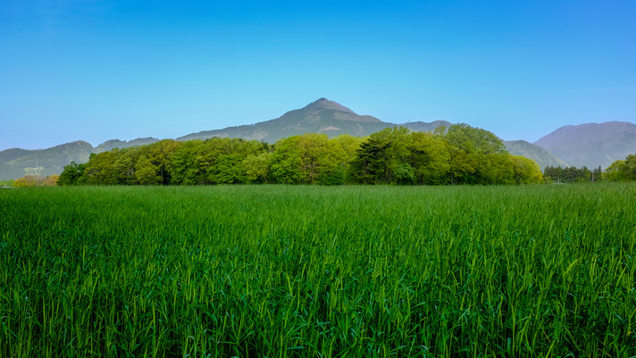 Early summer green Tochigi.jpg