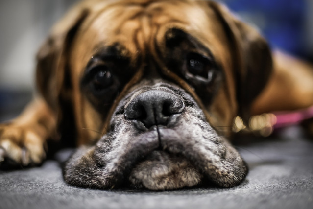dogs (1 of 1)-2.jpg