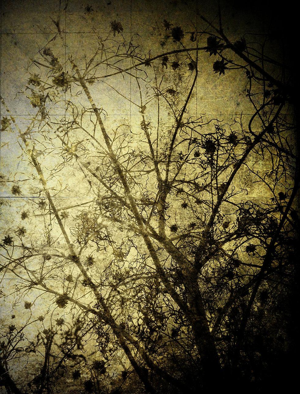 Kiiro_Photo_2012