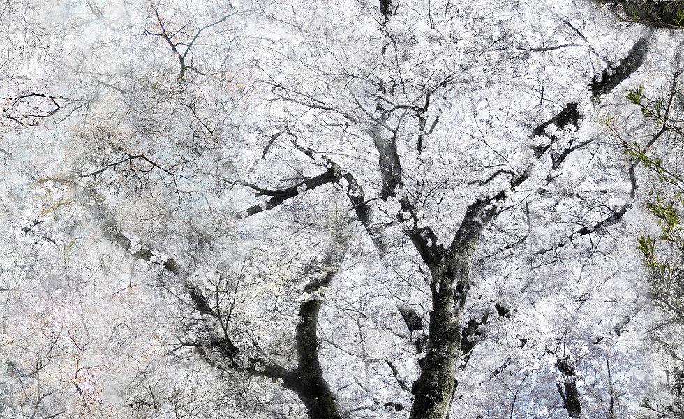 Kiiro_Photo_2017