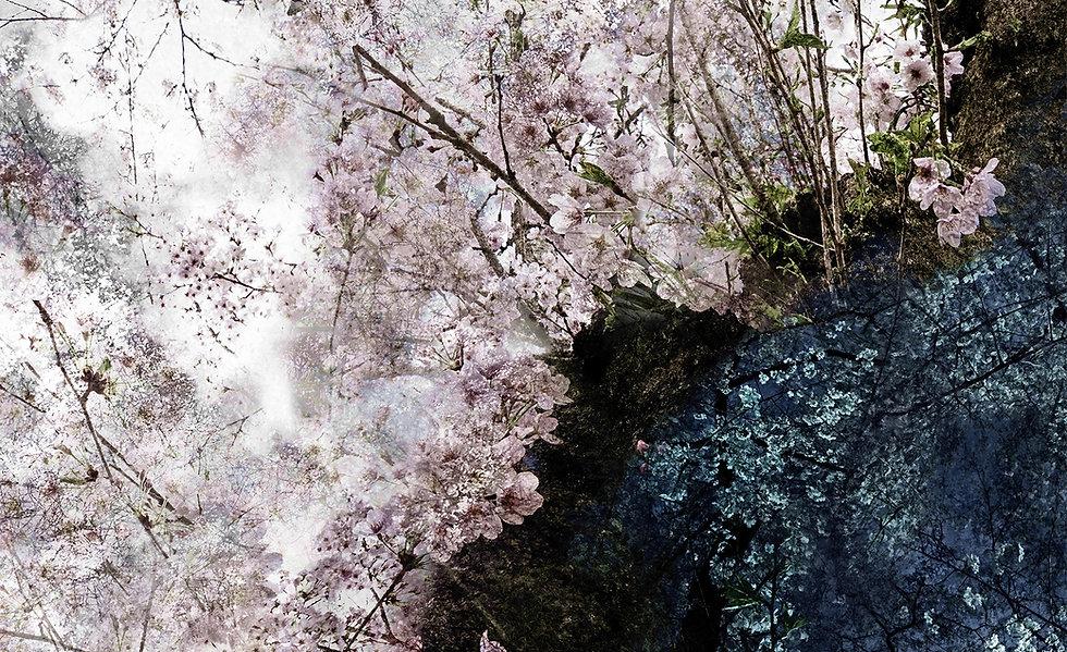 Kiiro_Photo_2019