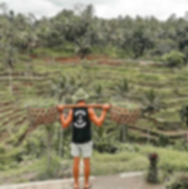 working hard in the Tegalalang rice terraces in ubud Bali