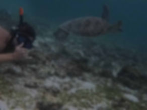 swimming wit turtles and sardines in Moalboal, Philippines