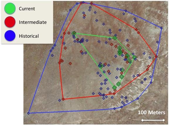 The incredible shrinking pika (habitat) of Niwot Ridge?