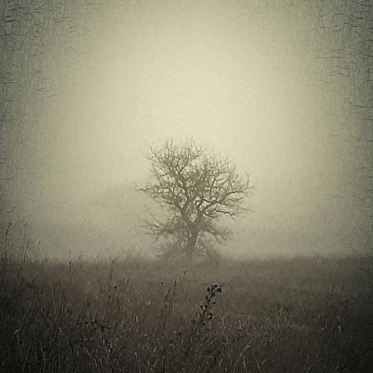 Silence engourdi