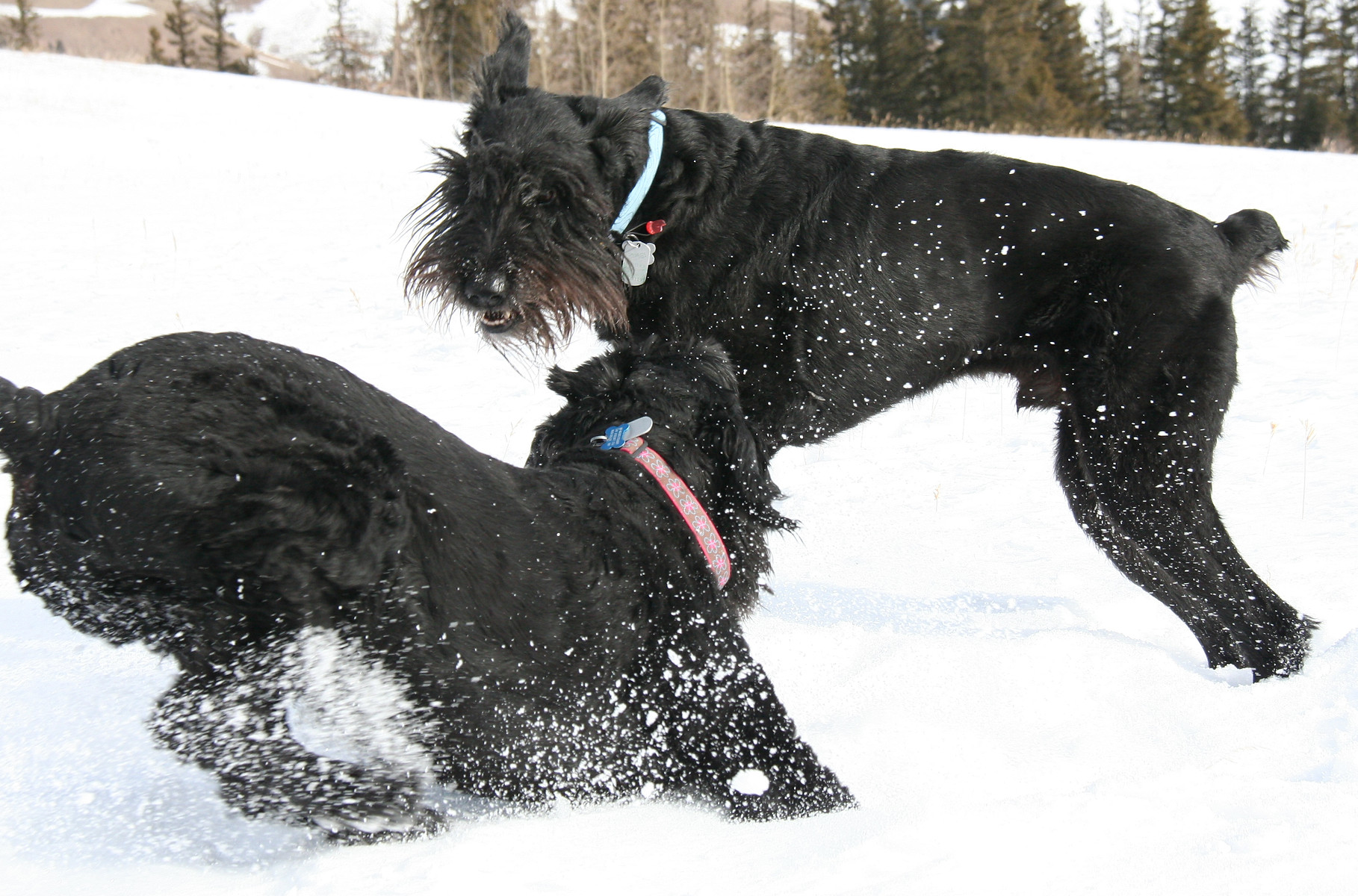 Four Paws Running Wild Pet Care Services in Boulder County Colorado