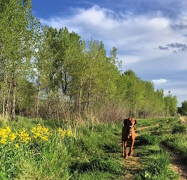 Dog Walking in Boulder, CO