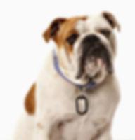 dog tag, собачья метка, собачья бирка, жетон для питомца, жетон на ошейник, жетон для собаки, житон для собаки