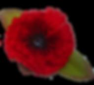Символ Победы, значок мак, значок на пиджак мак, цветок мака