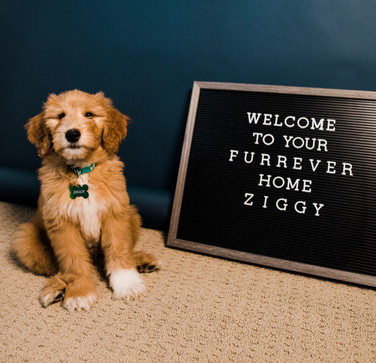 August 2020 Ziggy Comes Home