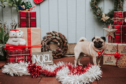 Christmas Dog Photos