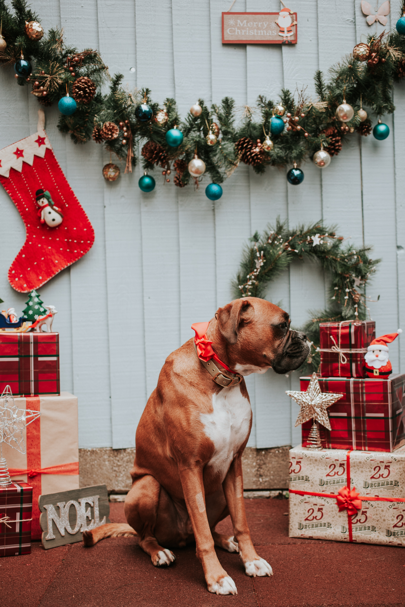 Christmas Dog Photos