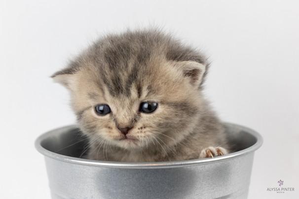 kittensjune2020-24.jpg