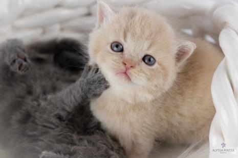 kittensjune2020-5.jpg