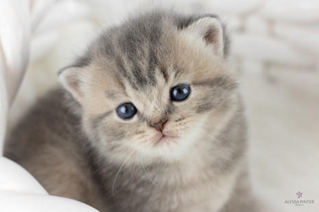 kittensjune2020-22.jpg