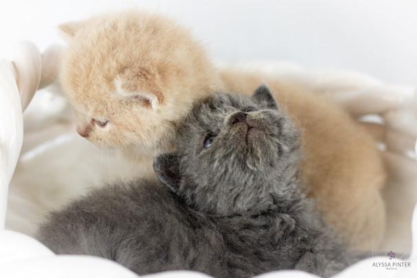 kittensjune2020-2.jpg