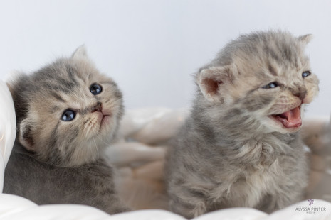 kittensjune2020-14.jpg