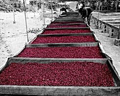 caffecrudo.png