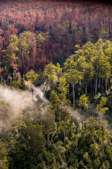 Sustainable Timbers Tasmania