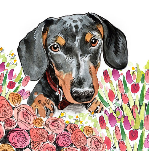 pet illustration sausage dog watercolour