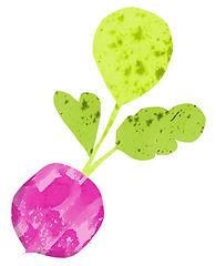 food-drink-commercial illustrator-radish